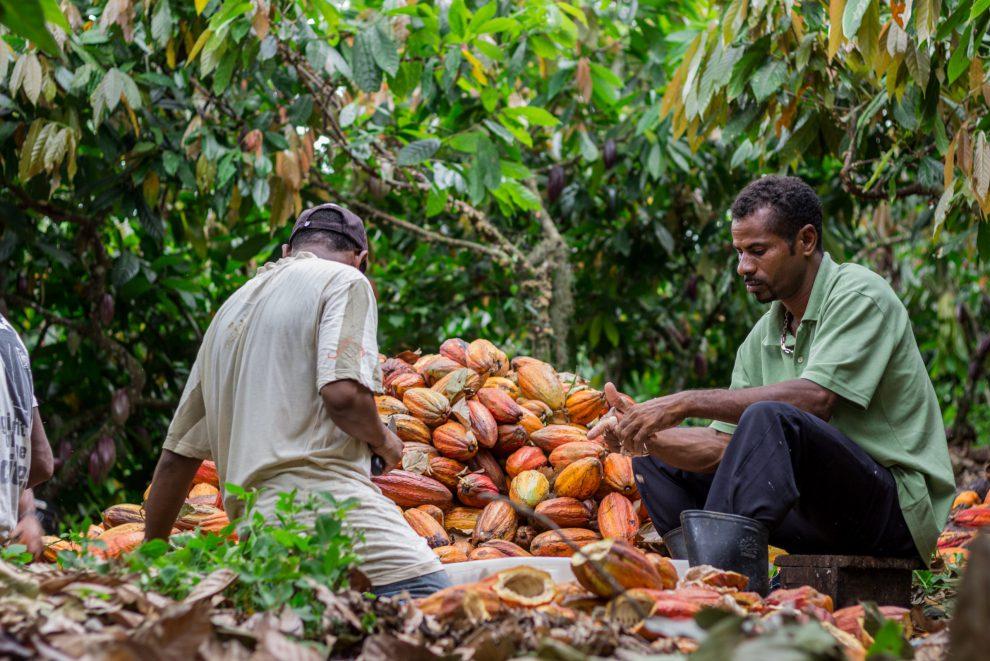 Vegan kakao Arriba Nacional