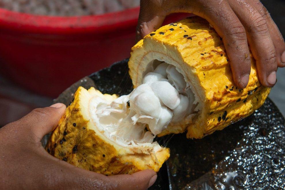 Sirovi kakao Arriba Nacional