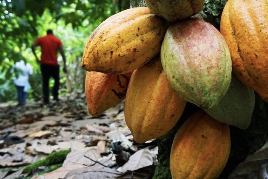 Arriba Nacional Organic